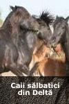 Caii sălbatici din Delta Dunării